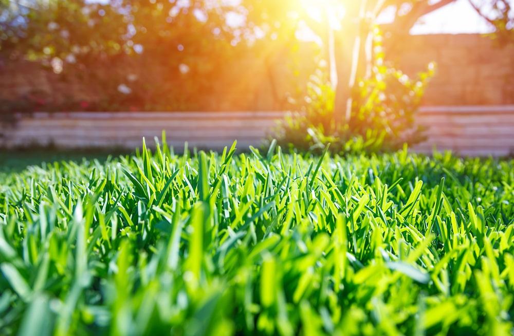 芝生の手入れのポイント