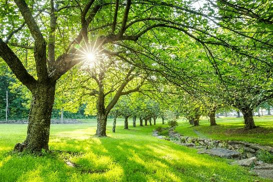 心が落ち着く自然豊かな公園